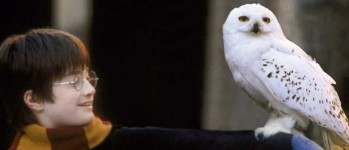 Hedwig on Harry's arm