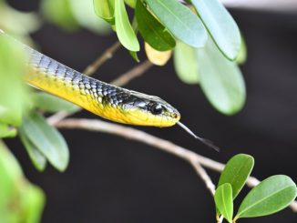 snake in a tree