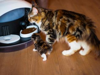 Intelligent cat feeder
