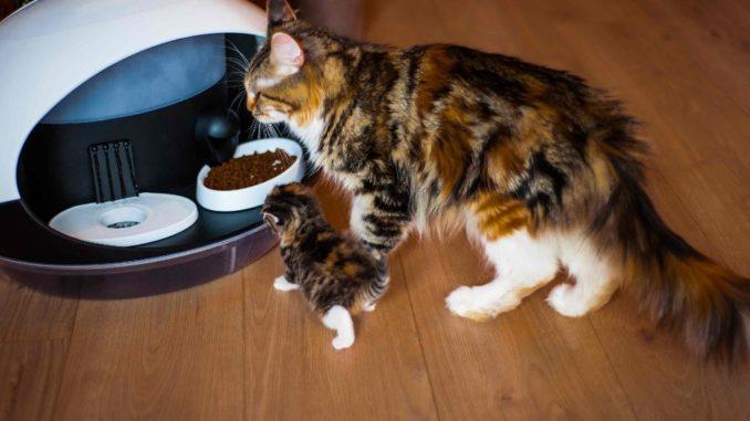 Intelligent cat feeder