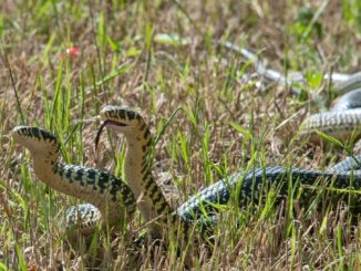 Tricks to prevent snakes approaching your home